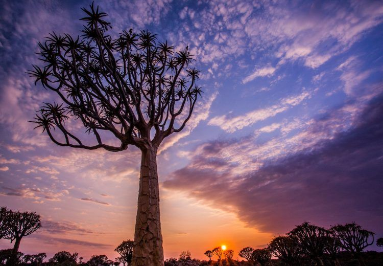 Sunrise at the quiver tree forest in Namibia, a classic photography subject