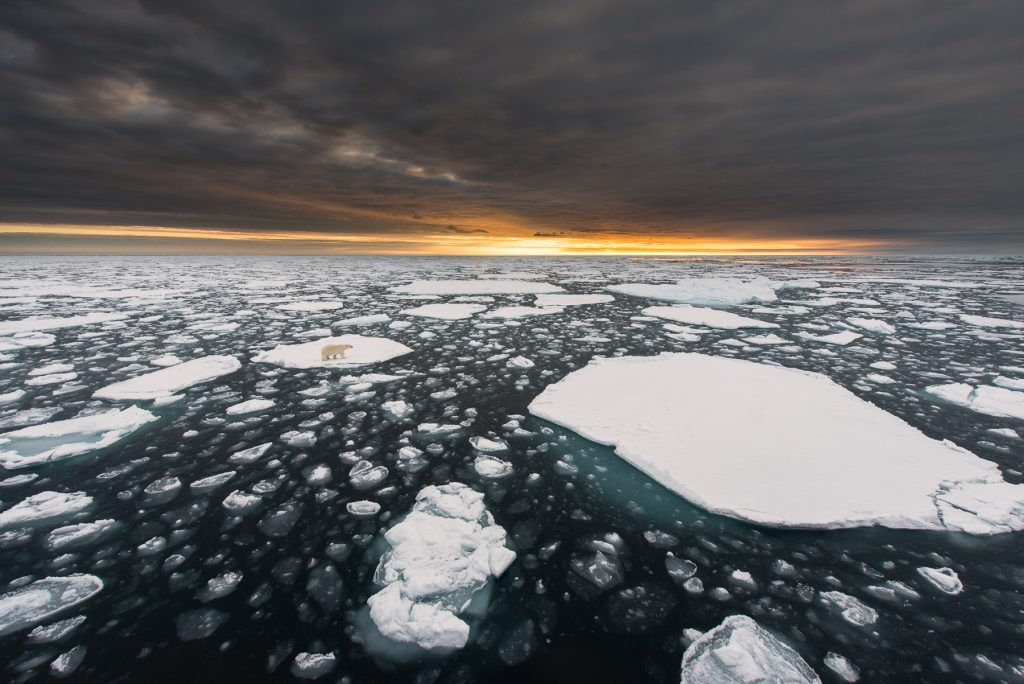 Polar bear (Ursus maritimus) on an ice flow off northern Spitsbergen in Svalbard, as the sun sets on the horizon