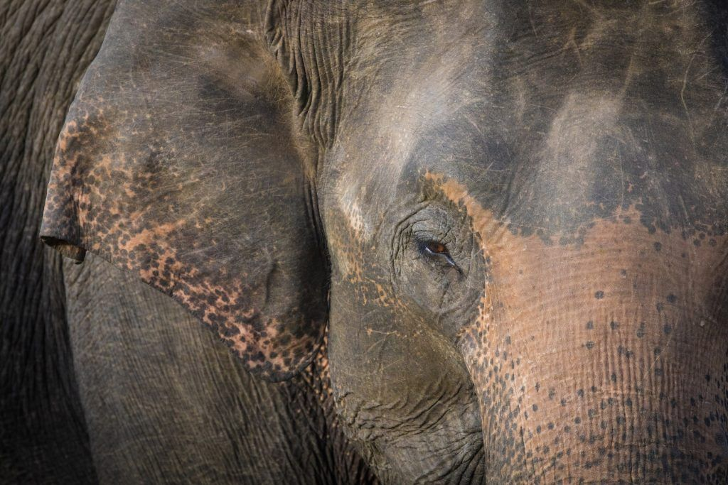 Photographing elephants on their migration is an amazing part of any photography tour in Sri Lanka