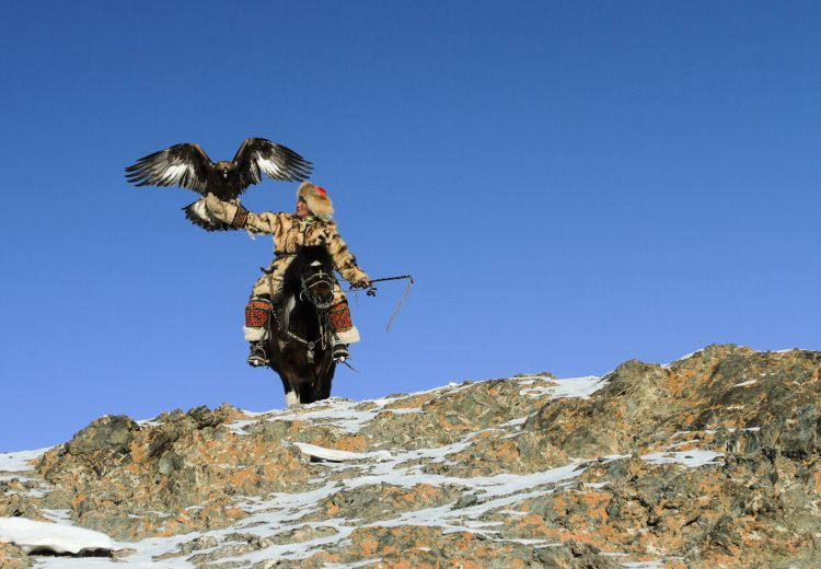 A Kazakh Eagle Hunter prepares to hunt with his eagle high on a Mongolian mountainside on our western Mongolia photography tour