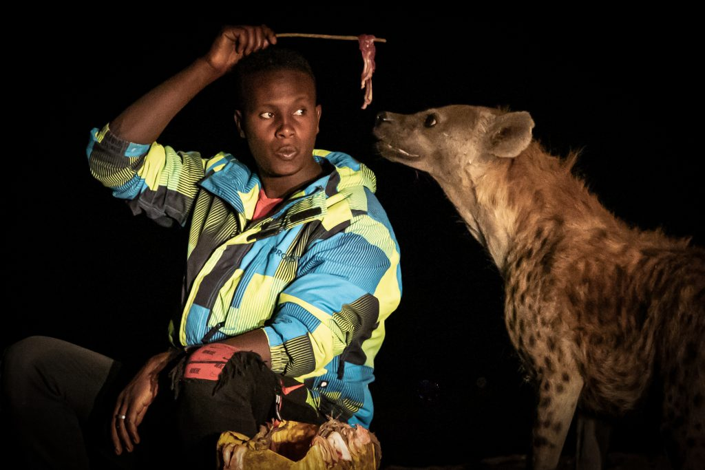 Abbas, the most famous of the Hyena Men of Harar, feeding one of his Hyena friends