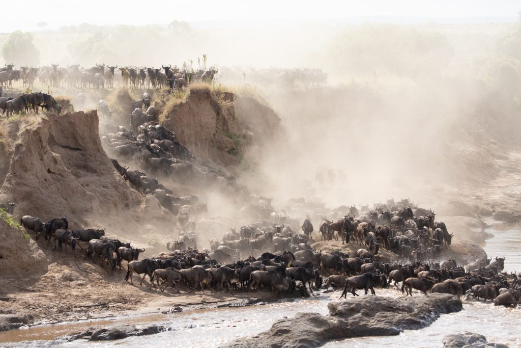 Dust swirls above the masses as a crossing begins (Image by Inger Vandyke)