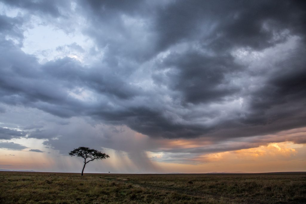 Storm and rains trigger the migration of wildebeest across the Maasai Mara National Reserve (Image by Inger Vandyke)